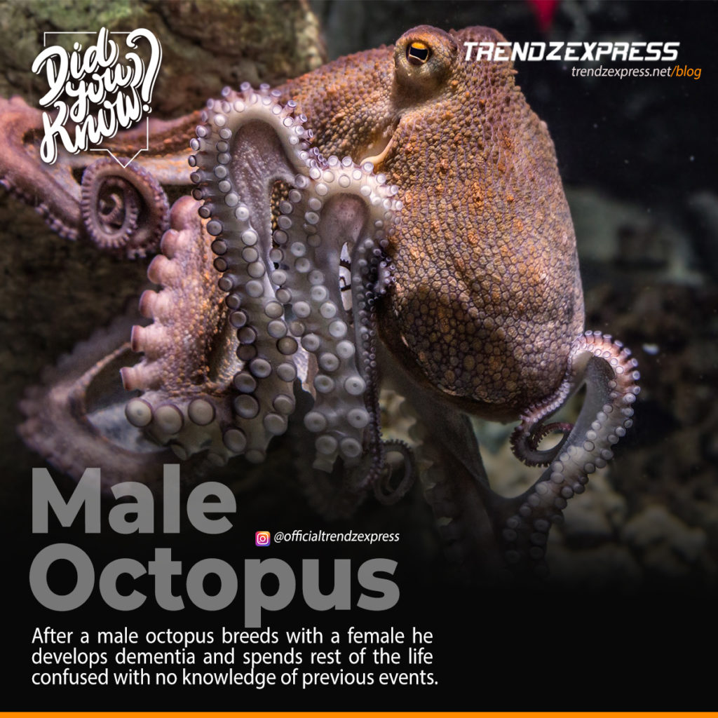 Awesome and interesting facts about Octopus